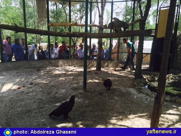 فضای همدلی خرمآبادی مقیم تهران در بازدید از کلینک حیوانات پردیسان تهران/ سوگوار جنگلهای کوهدشت هستیم